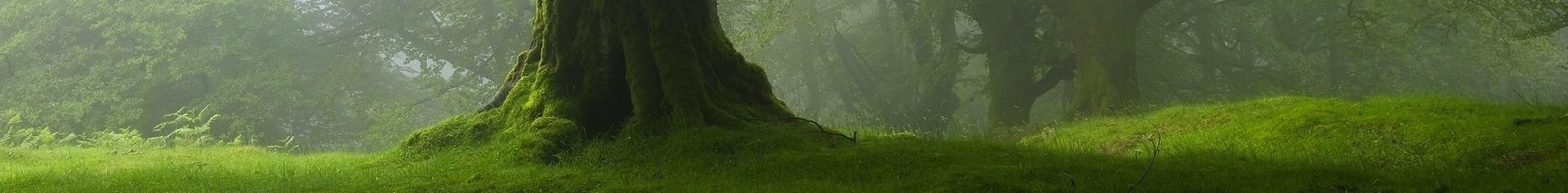 pied-arbre